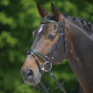 Waldhausen Star Trensenzaum Diamond mit Strass grün Pony