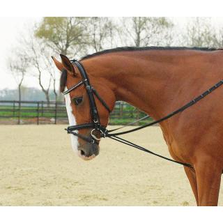 Shetty/Pony